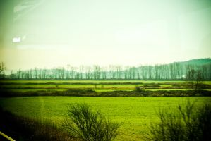 all the trees of the field... by Nadja18