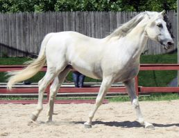 Andalusian 9 by roar-shack-stock