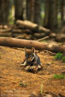Wolf Pup in the Woods by Shadow-and-Flame-86