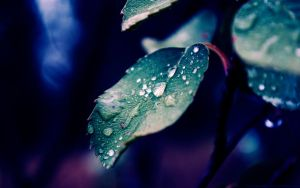 Fall Rain 2 by nemesis158