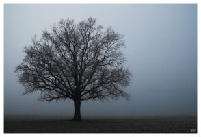 Tree by salviphoto