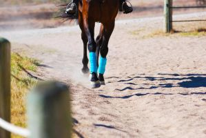 Down the Straightaway by EquineImages