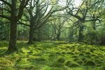 Eskdale Woods by scotto