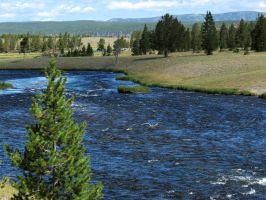 A River Runs Through Yellowstone by LaurelPhotoandCraft