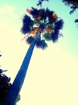 A Picture That I took And redrew as  a Palm Tree by TheOfficialLobst