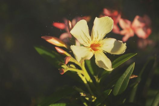 The special one of my garden by OrtizVJoel