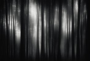 Dark Forest by BranislavFabijanic