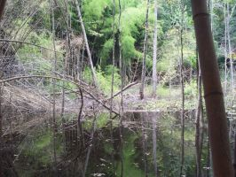 Bamboo Forest Stock- Swamp by ComatosePrincess