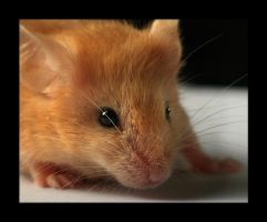 Mouse bigger by Hector42