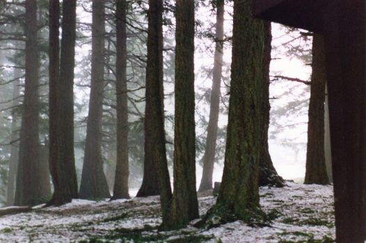 Fog in Trees 2 by Nystagmuz-stock
