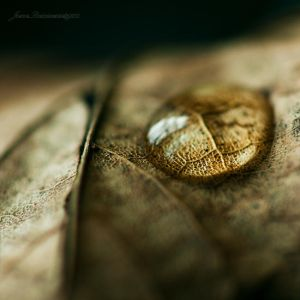 crying leaf III by *JoannaRzeznikowska