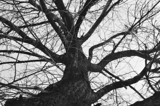 Just tree by Heathermccrystal