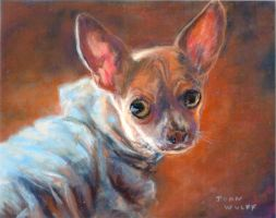 Leo the Chihuahua by Wulff-Arts
