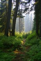 Forests of Seattle by IsabelIntangible