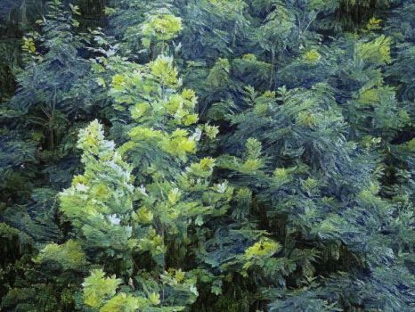 Trees Van Gogh's Style by dcalq3dneopl