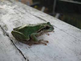 Tree frog by Guardian0660