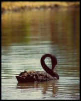 The Not So Ugly Duckling by Eternal-Polaroid