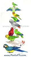 Parrot Stack by Foxfeather248