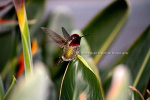 Humming Bird 2 by WesHPhotography