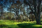 ..green__.. by pavel89l1