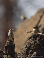 House Wren and chicks by austinboothphoto