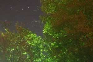 Starry Night with Trees by greenwalled1