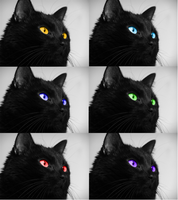 6 Cat Experiment by Wolf-Shadowrunner