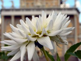 Flower at sacred place by bwanot