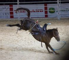 STOCK - Equitana 2013-512 by fillyrox