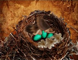 A Bird in the Nest... by faryewing