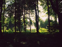 Forest jungle 1 by L-JustinePhotography