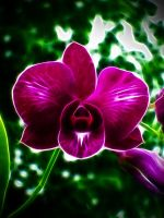 Summer Orchid by gilbzzZZzz