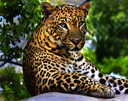 Leopard by donvito62