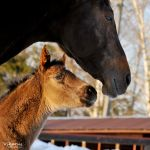 young and old by Vikarus