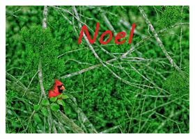 Noel (Christmas card 5x7) by clippercarrillo