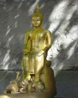 Buddha in the Shade by MNCrowgirl