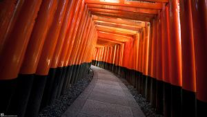 Fushimi Inari-taisha by burningmonk