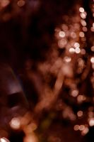 auburn bokeh by miss-deathwish-stock