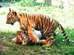 Tiger cubs playing 01 by FoxRAGE-Stock