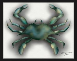 The Blue Crab by Keith0186