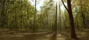 Forest Matte Painting by kitster29