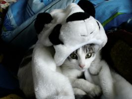 Moxa the kitty panda by CAVAFERDI