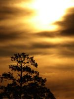 Gold and Tree 2 by Sharondipity