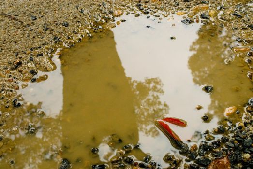 Water Puddle by Danika-Stock