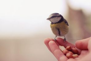 Bird in my hand by FreyaPhotos
