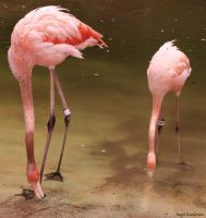 Flamingos by IntoTheFire92