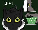 Meet Levi by MadCheshireFox