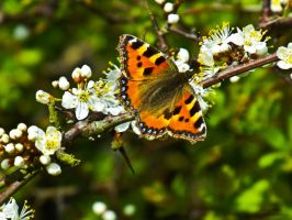 Butterfly 1 by The-LonePhotographer