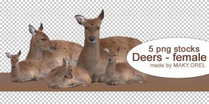 PNG STOCK SET: Deer - female (Doe) by MAKY-OREL