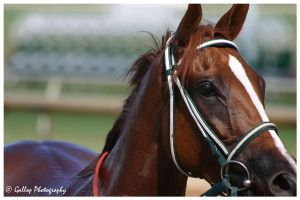 Chestnut Filly by xThoroughbred